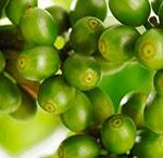 lavkarbo vekttap Grønn kaffebønne og bringebærketoner